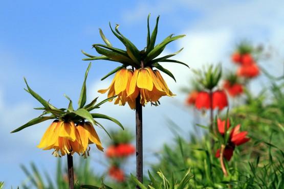 'Bu çiçekleri koparmak yasak: İşte Sözleşmeyle Korunan Çiçekler''