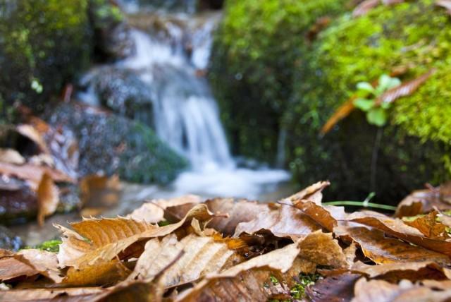 Oksijen zenginliğiyle dünyanın nadir bölgeleri arasında yer alan ve her mevsim farklı güzelliklere bürünen Kazdağları, sonbaharda sarı ve yeşilin tonlarıyla renk cümbüşü sunuyor.