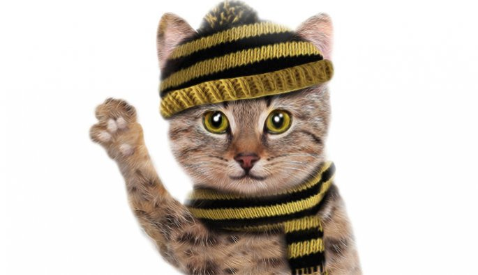 Kediler hakkında bilmeniz gereken 12 ilginç bilgi