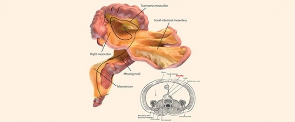 İnsan vücudunda yeni bir organ keşfedildi!