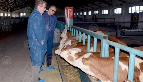 Avusturya Heyeti, Kars'taki Süt Üretme Tesislerini İnceledi