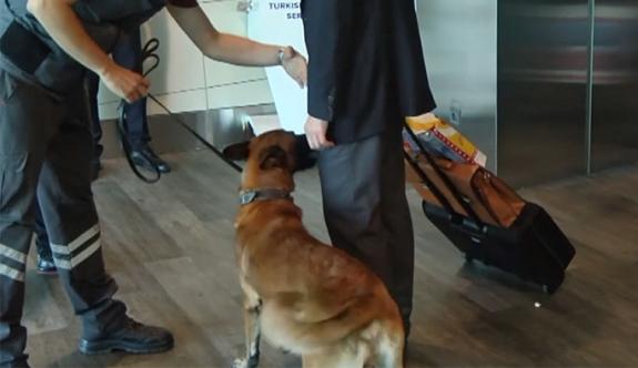 """Türkiye'den Avusturya vatandaşlarına """"köpek ile yolcu arama"""" uygulaması"""