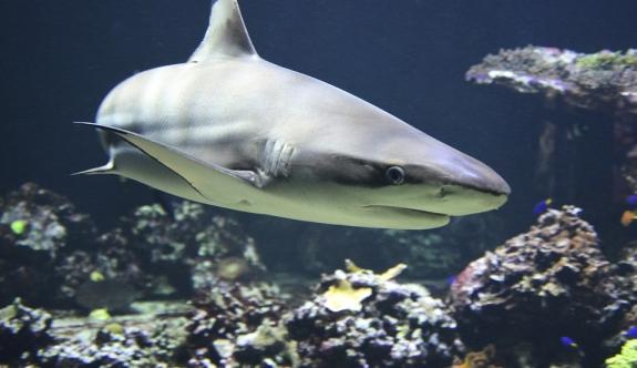 Kosta Rika'da köpekbalığı bir can aldı
