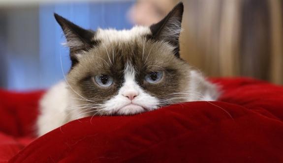 Fenomen kedi Grumpy Cat'e rekor tazminat!