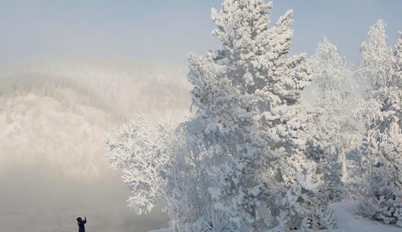 -30 derece soğukta çam ağacı yapraklarını yiyerek hayatta kaldı!