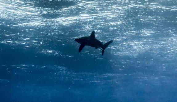 Okyanus seviyesi bu yüzyılın sonuna kadar 65 cm yükselecek!