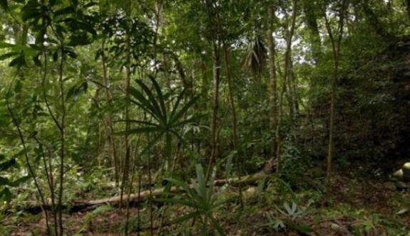 Ormanın altında lazerle gizli Maya şehri bulundu!