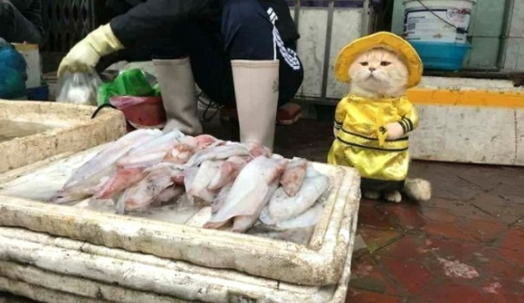 Balıkçı kedi sosyal medyayı salladı!
