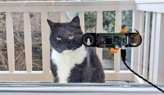 Kedisi için yüz tanıma cihazı icat etti!