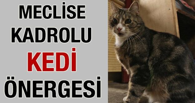 Bunu da yaptılar: Kadrolu Kedi Önergesi