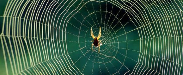 ''Örümcek ağının şifresi çözüldü''