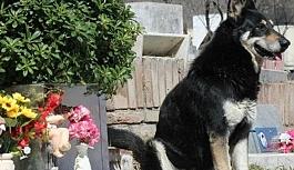 12 yıl sahibinin mezarı başında yaşamıştı!