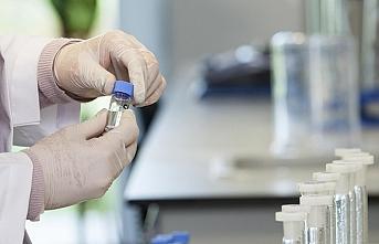 AB'de Batı Nil Virüsü paniği