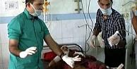 Bir kadın, kendisine saldıran leoparı öldürdü