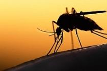 Viyana Tıp Fakültesi'nden kritik 'Zika Virüsü' Açıklaması