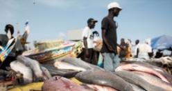 "Dakar'da ""Sioumbediom"" balık pazarı"