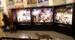 Telef olmuş hayvanlardan zooloji müzesi kurdu