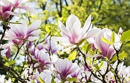 Bahar yorgunluğuna ne iyi gelir?