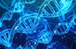 'Dünyanın ilk genetik tasarımlı bebekleri doğdu'