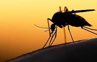 Viyana Tıp Fakültesi'nden kritik 'Zika...