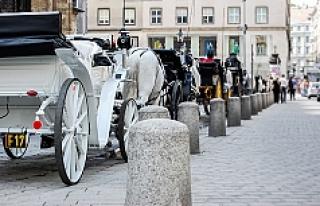 Viyana'nın tarihi dokusu eşliğinde Avusturya...