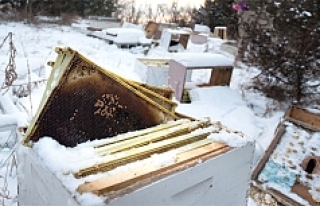 İki çocuk 500 bin arının ölümüne yol açtı!