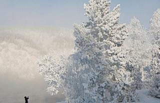 -30 derece soğukta çam ağacı yapraklarını yiyerek...