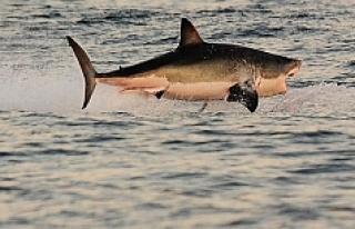 Bahçesine gökten köpekbalığı düştü!
