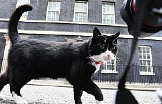İngiltere, kedi Palmerston'un aldığı kilolardan...