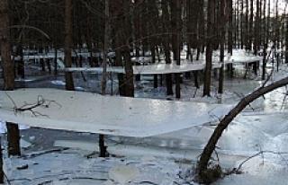 Polonya'da donan göl ağaçlara asılı kaldı