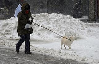 Avusturya'da yoğun kar yağışı 6 can aldı