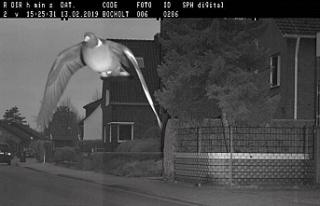 Alman yetkililer hız sınırını aşan güvercinin...