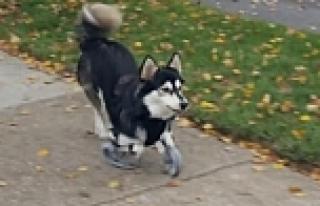 Köpeğe 3D yazıcıdan protez üretildi