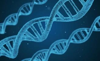 İnsan yüzünü şekillendiren 15 gen tespit edildi