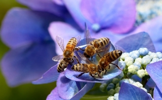AB'den arılara zararlı üç böcek ilacına yasak