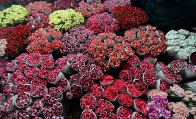 20 ülke, Kadınlar Günü'nü Türk çiçeğiyle kutlayacak