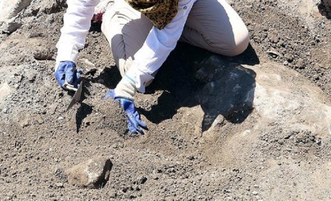 230 milyon yıllık sürüngen izi