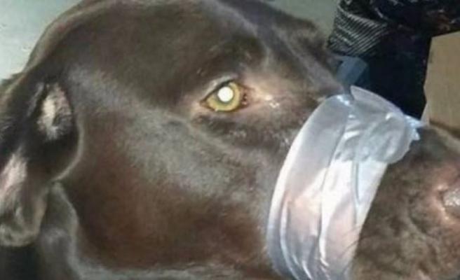 Köpeğinin ağzını bantlayan kadına hapis cezası