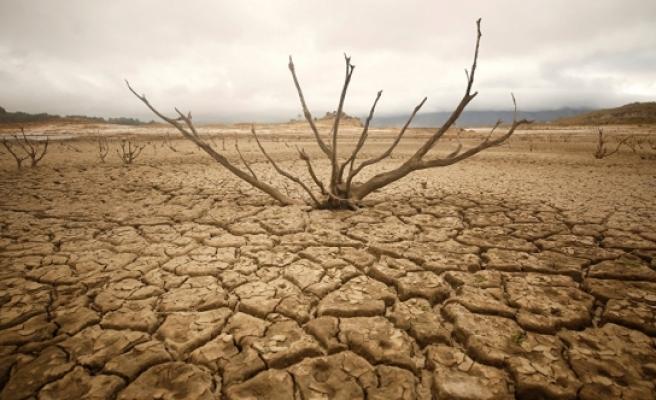 Güney Afrika'da kuraklık nedeniyle ulusal felaket ilan edildi!