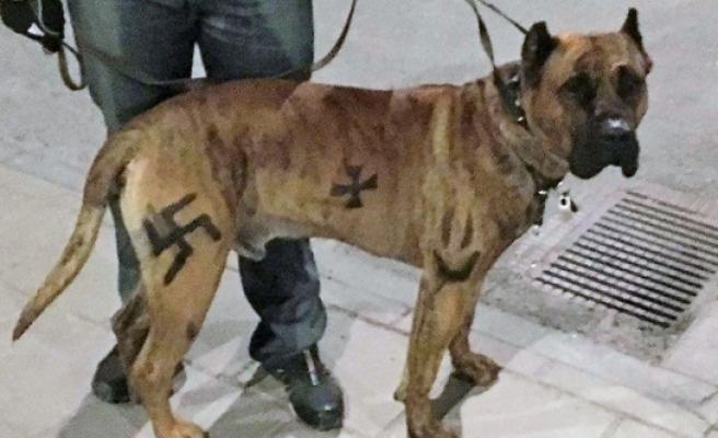 """İsveç'te köpeğine """"gamalı haç"""" çizen kişiye para cezası"""