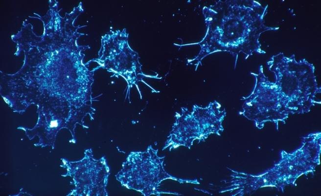Meme kanserini tespit eden kan testi geliştirildi